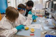 Lässt sich aus Zitronen elektrochemisch Strom gewinnen? Unter anderem diese Frage klärten die Schülerinnen beim Zukunftstag an der TU Clausthal (Institut für Elektrochemie). Foto: Ackermann