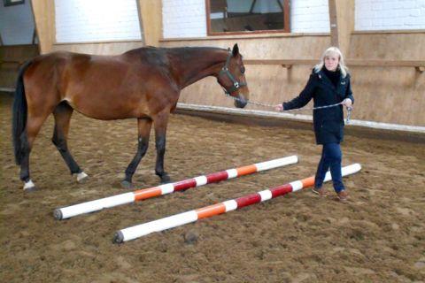 Andrea Hempel vom Zentrum für Hochschuldidaktik und Qualitätsmanagement in der Lehre der TU Clausthal gibt die Richtung vor, das Pferd folgt. (Foto: ZHD)